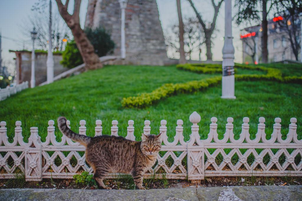 © Www.christosmavraganis.gr